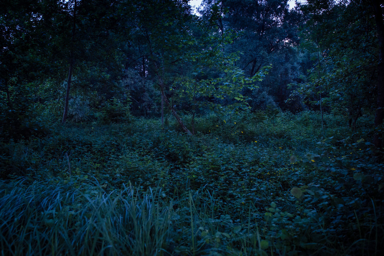 Oasi Fontane Bianche at night Fireflies Fireflies In The Night  Mistery Atmosphere Nature Nature Night Night View No People Non-urban Scene Summer Tranquility Tree WoodLand WoodLand