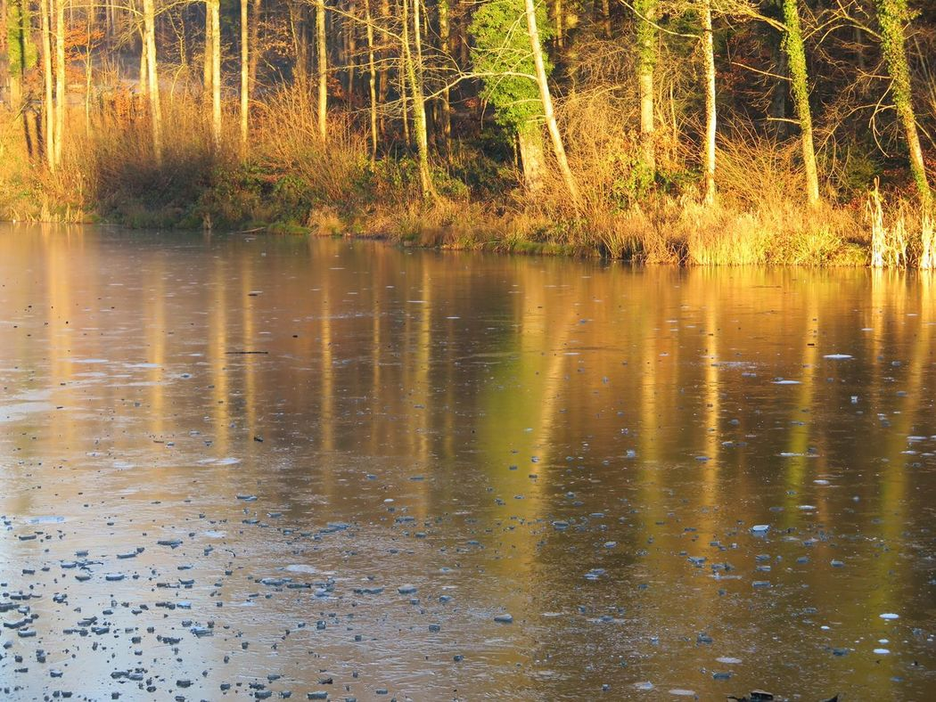 Sunlight Trees And Nature Warm Colors Warm Lighting Frozen Ponds Waterreflections  Trees Winterthur Switzerland