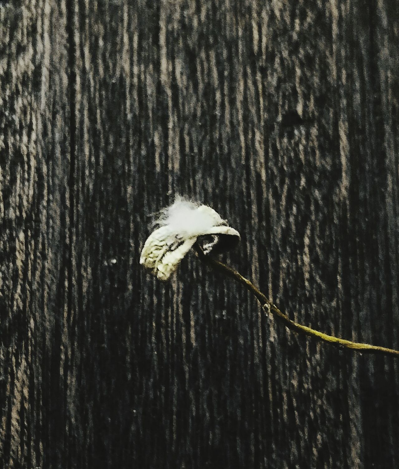 Cottonwood Cottonwood Trees Leaves_collection Wood Grain Beauty Fine Art