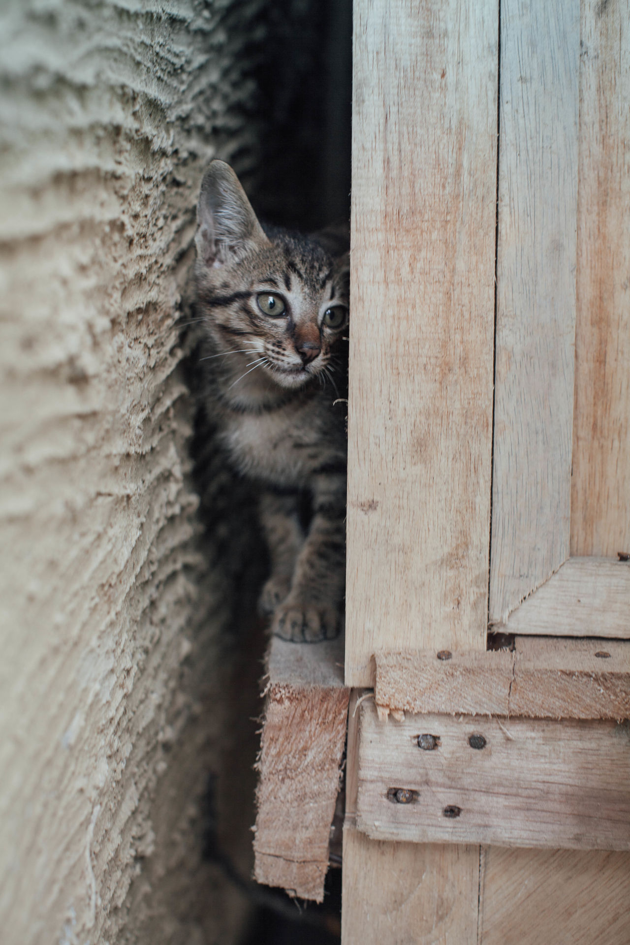 Animal Themes Close-up Day Domestic Animals Domestic Cat Feline Kitten Looking At Camera Mammal No People One Animal Outdoors Pets Portrait Wood - Material