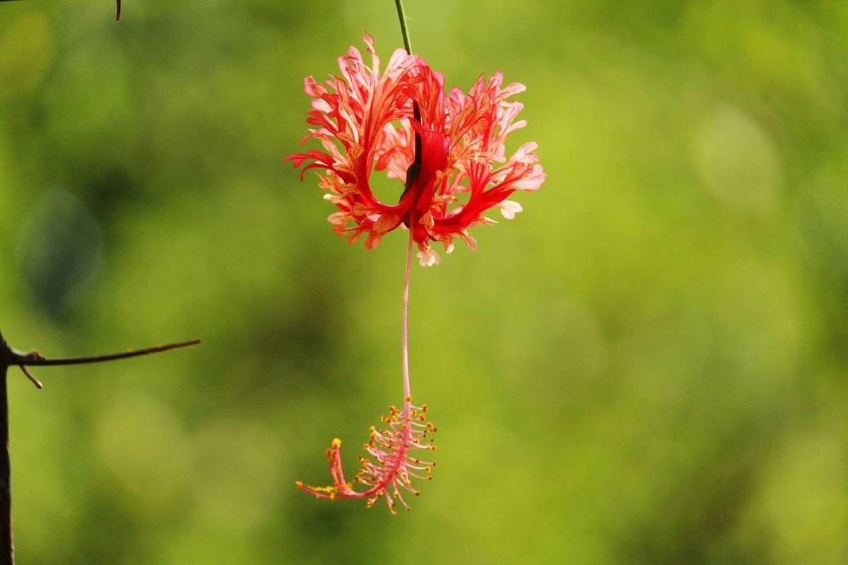 Nature Photography Flowers Naturelovers Beautiful Newoneyeem Nature In Mumbai