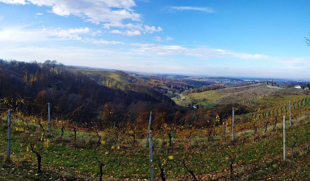 Autumn Wineyards Blue Sky One Cloud Landscape Nature Agriculture No People Day Tranquil Scene Rural Scene Hills And Valleys