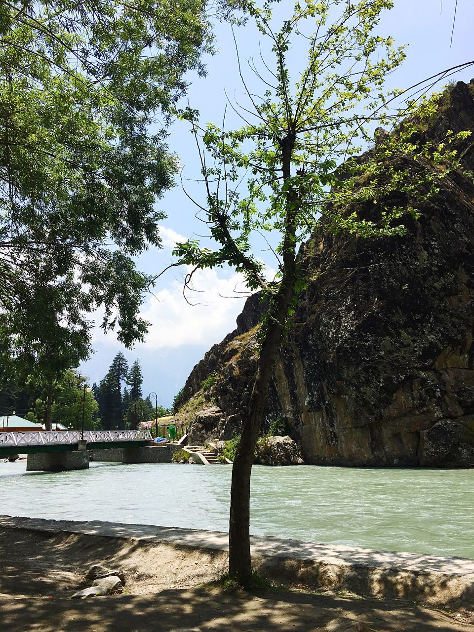 tree, water, nature, sky, beauty in nature, day, tranquility, no people, tranquil scene, outdoors, scenics, sea, mountain
