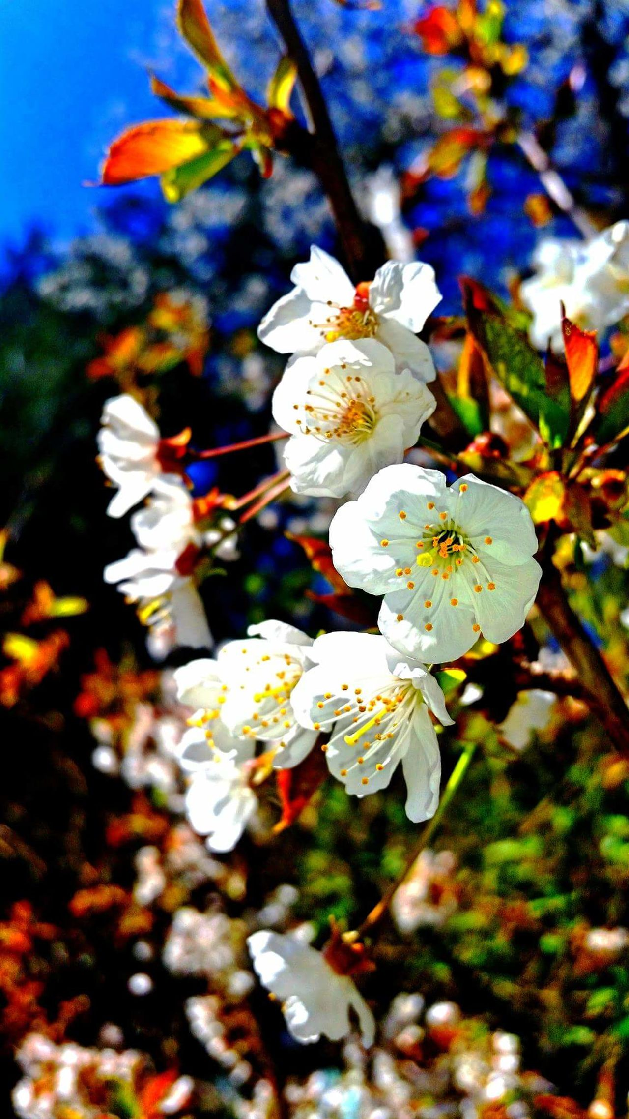 EpicShotPhotography Getty X EyeEmSpring 2016 Spring Blossoms Grants For Photographers Springtime ,march Showcase Getty & Eyeem Getty Images Washington State EyeEmxGettyImages EyeEm Gallery Q13spring Wild & Pure Nature_collection Landscape_collection EyeEmNatureLover King5spring Buyme Getty X EyeEm Images Gettyimagesinstagramgrant EyeEm Nature Lover Gettyimagesgallery NaturesNirvana NorthwestnaturetrekGettyimage Nationalgeographic Epic Shot Photography
