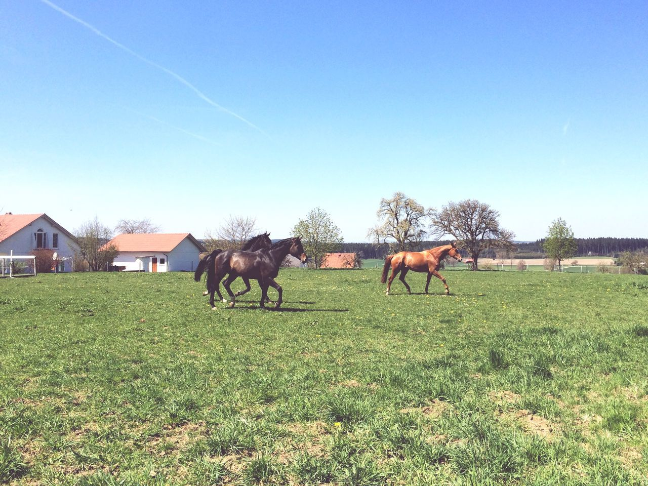 Horses Running Galopp Horsepower Horse I Love Horses Freedom Free Healthy