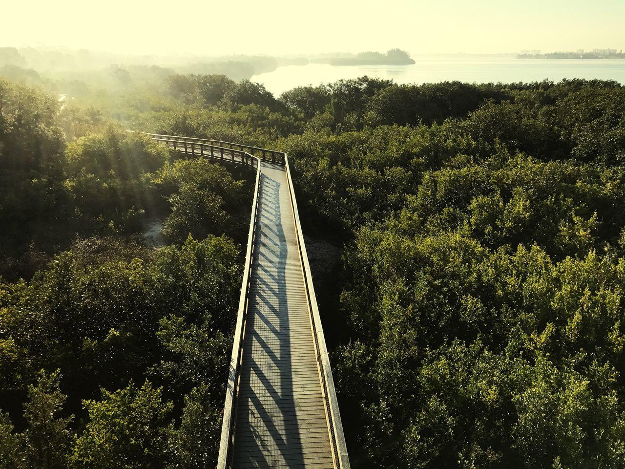 Outdoors Nature Foot Bridge Boardwalk Sun Glare Forest Mangrove Built Structure Landscape Bay Sunrise The City Light