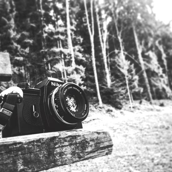 Nature Tree Outdoors Blackandwhite Scenics Nikon Nikonem Nikonphotographer Analogue Photography Camera 1979 EyeEm Best Shots Tiltshift Kodak Film Photography Film