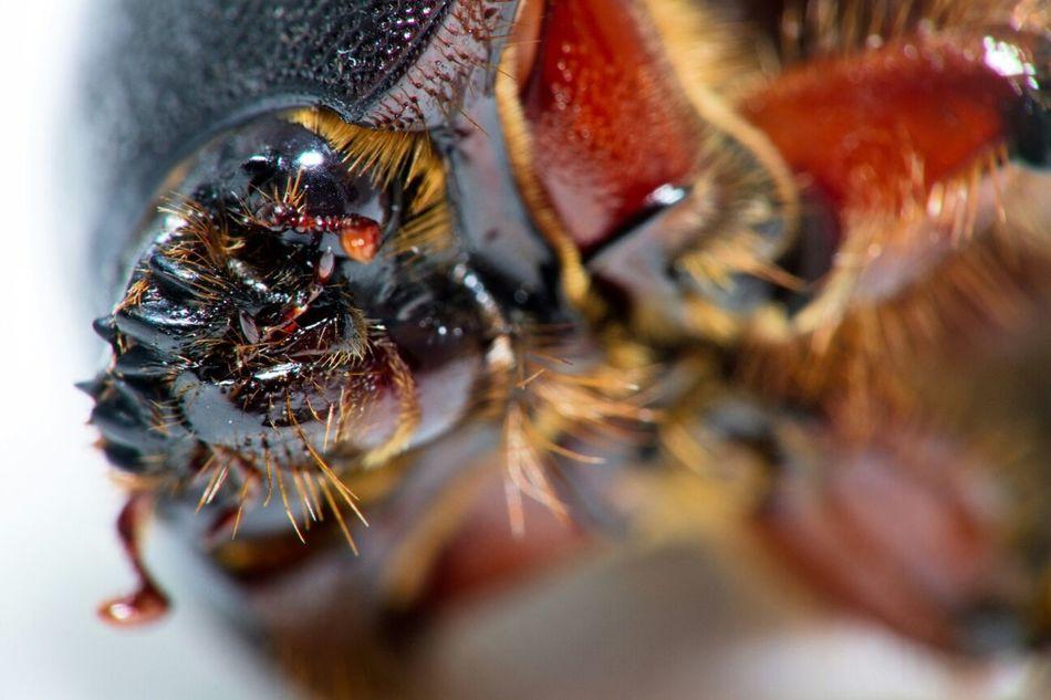 Head of beetle. Bugs Macro Photography Taking Photos