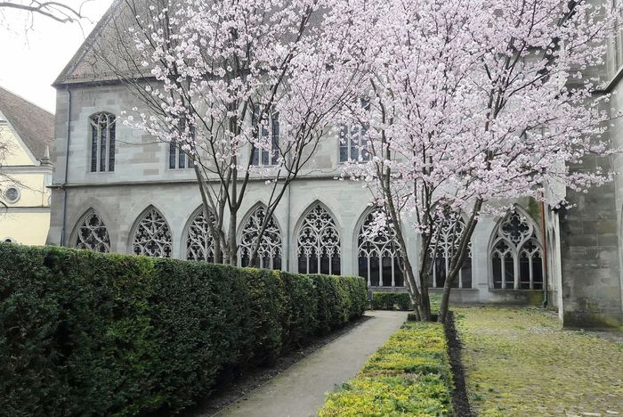 Springtime Building Exterior Church Architecture Church Windows Blossoming Tree Blossoming  Spring Tranquility Monastery Architecture No People Outdoors Tree Beauty In Nature Nature Day Retreat Kontemplation Konstanz Constance