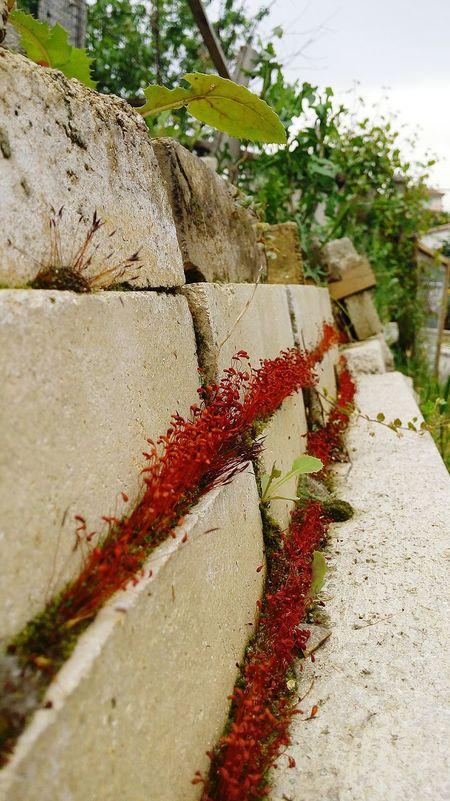 Red Boring Garden 👀