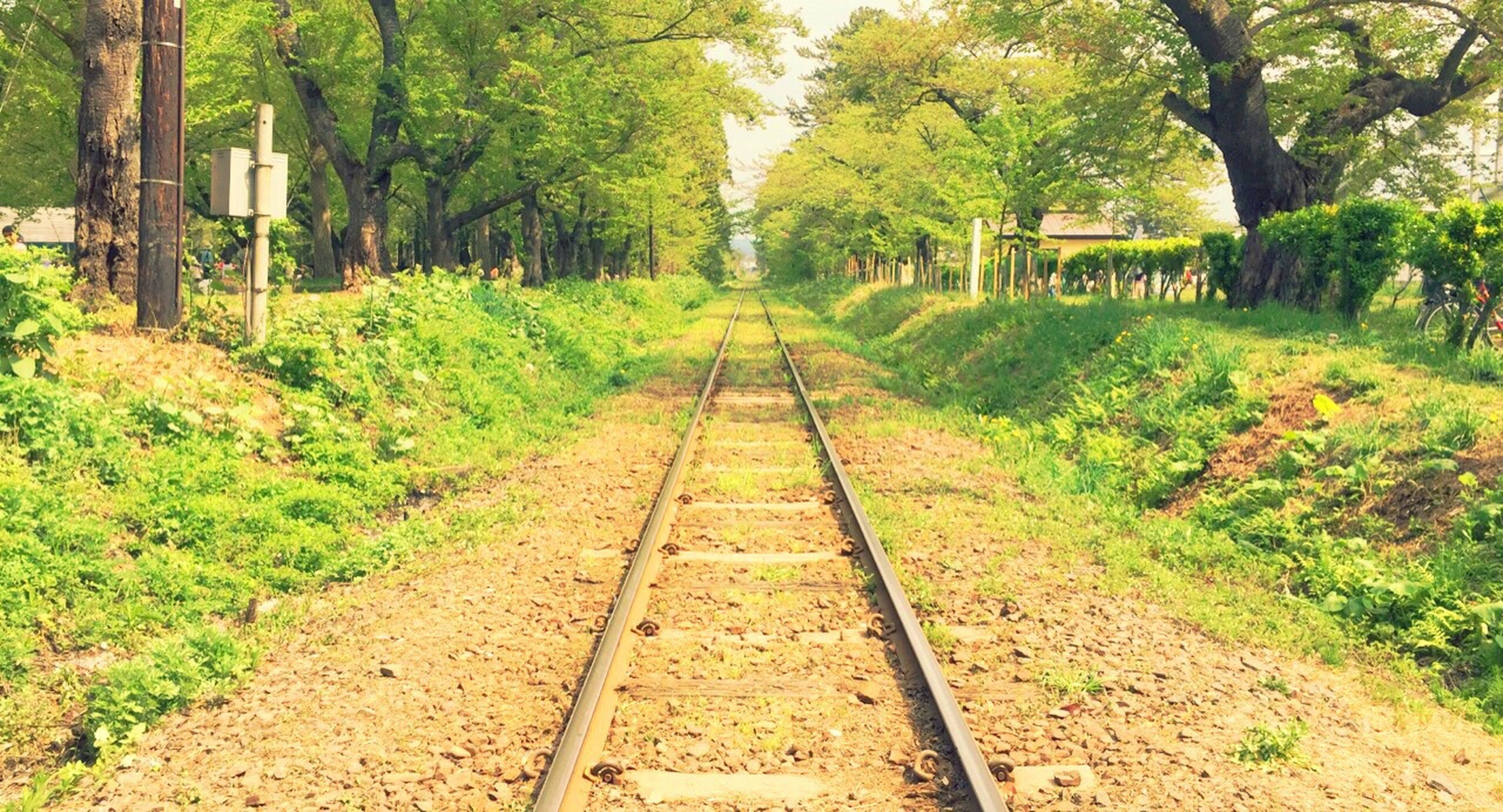 tree, the way forward, green color, diminishing perspective, growth, vanishing point, transportation, tranquility, nature, grass, tranquil scene, railroad track, plant, day, footpath, outdoors, no people, lush foliage, forest, beauty in nature