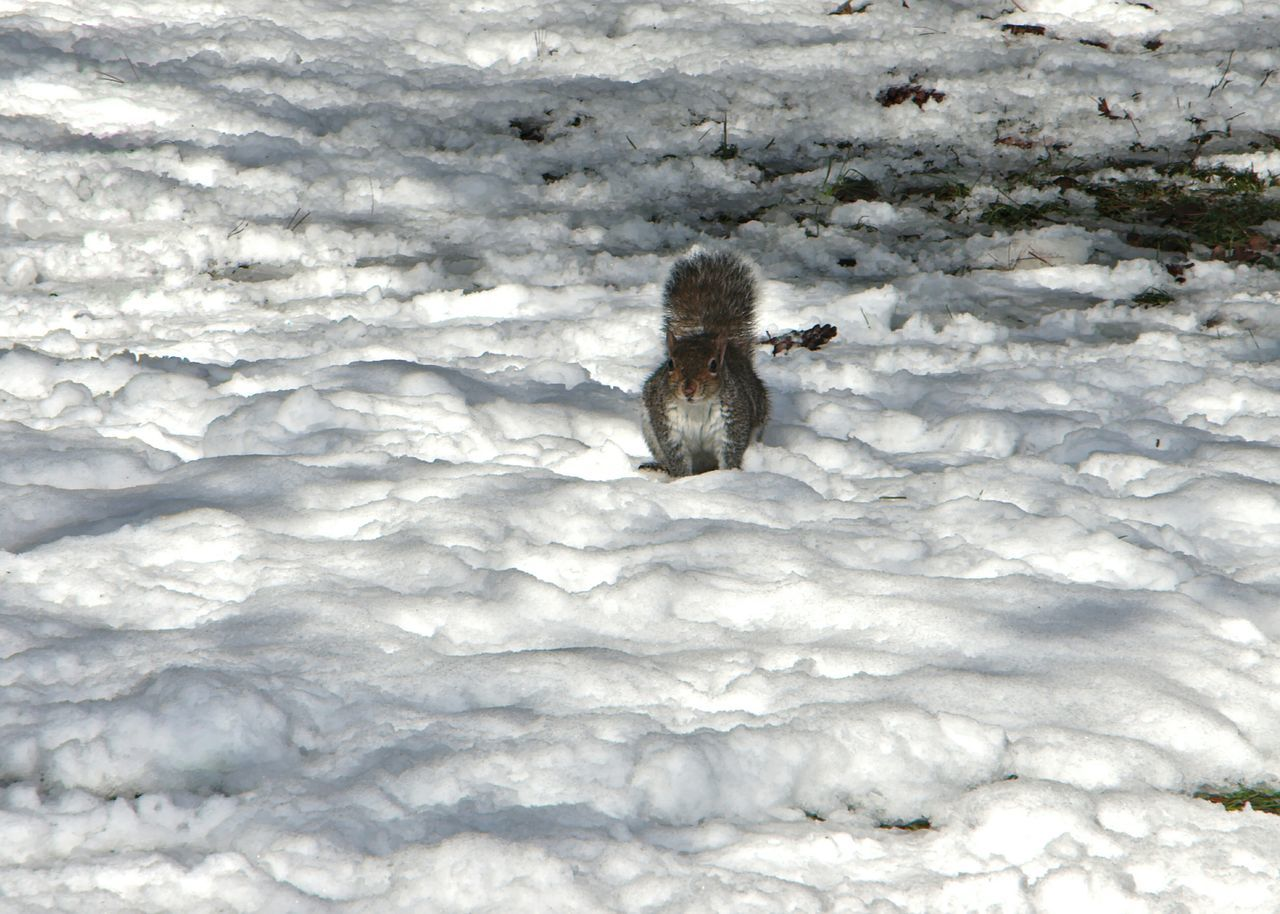 Squirrel Animals Animal_collection Snow Winter Italy Shootermag Taking Photos EyeEm Animal Lover