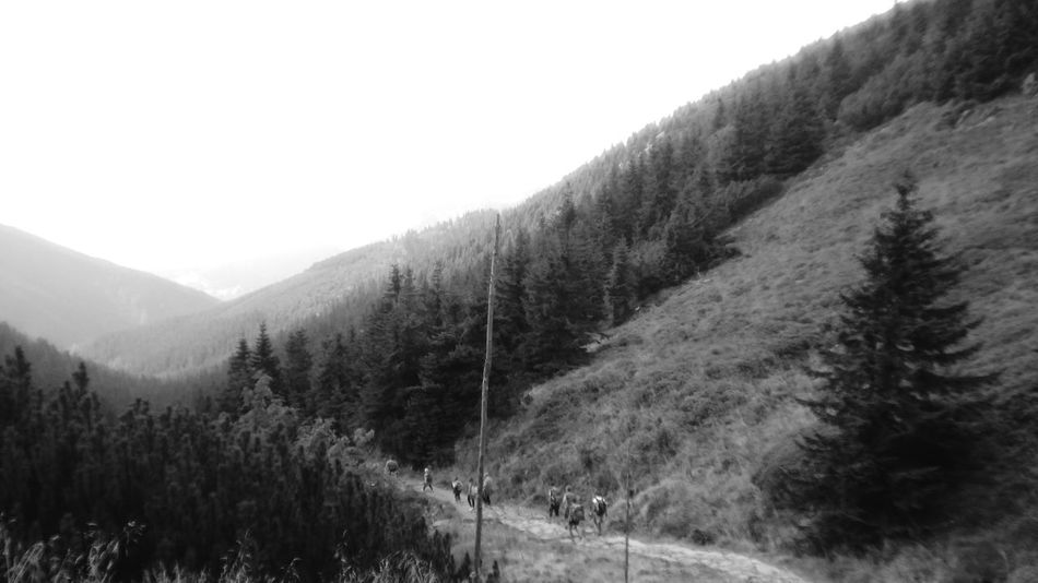 Mountain Karkonosze Summer Walking Tekking Walkers Path Nature Road