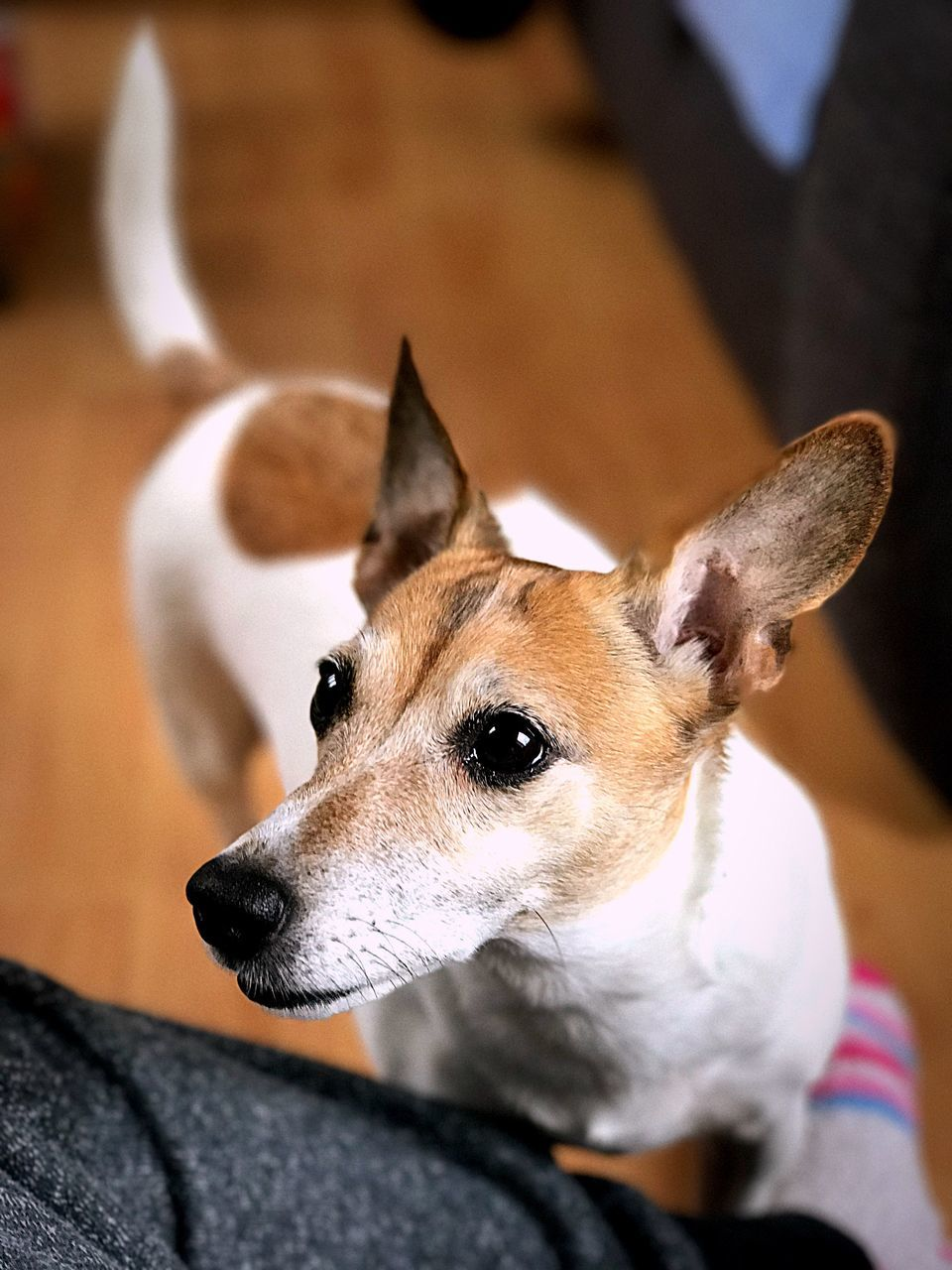pets, dog, animal themes, domestic animals, mammal, one animal, indoors, close-up, one person, sitting, portrait, day