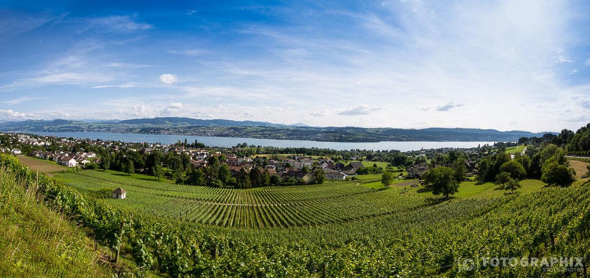 Zürisee Zürichsee Landscape Switzerland Landschaft