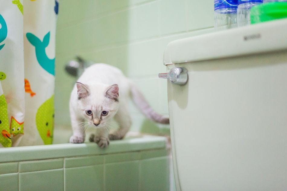 Beautiful stock photos of bad,  Animal Themes,  Attentive,  Bathroom,  Bathtub