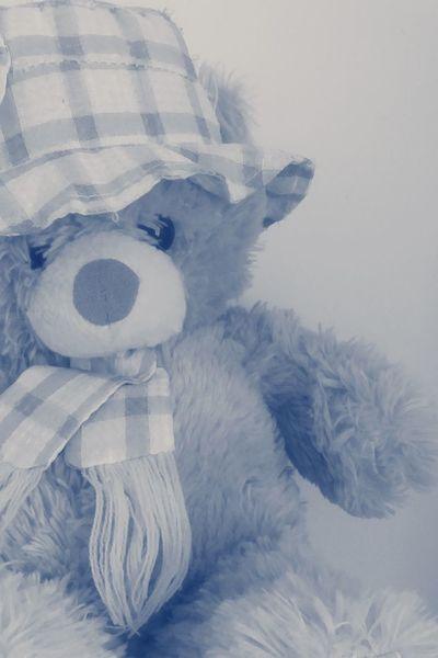 Teddybear Teddy Bear 🐻 Teddyboy