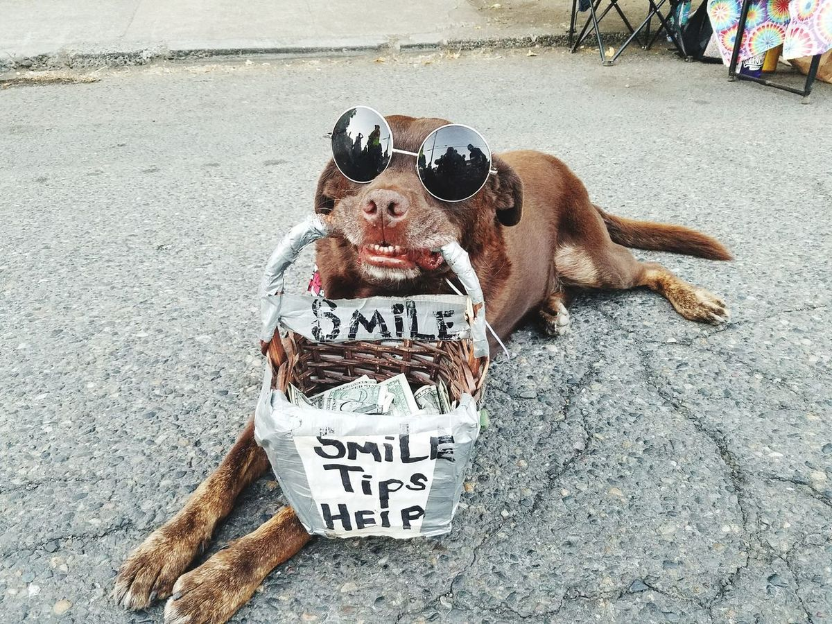 Pet Portraits Outdoors Dog Pets Portland, OR Keepportlandweird