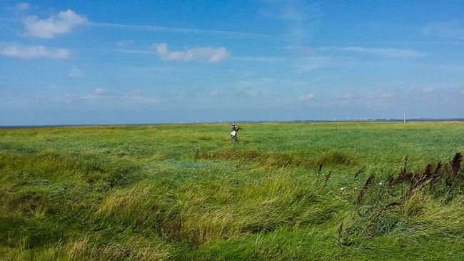 Grass Sky Tranquil Scene Green Color Field Horizon Over Land Clear Sky Outdoors Nordsee Büsum Kunst In Der Natur Naturelovers Art Lonely Objects