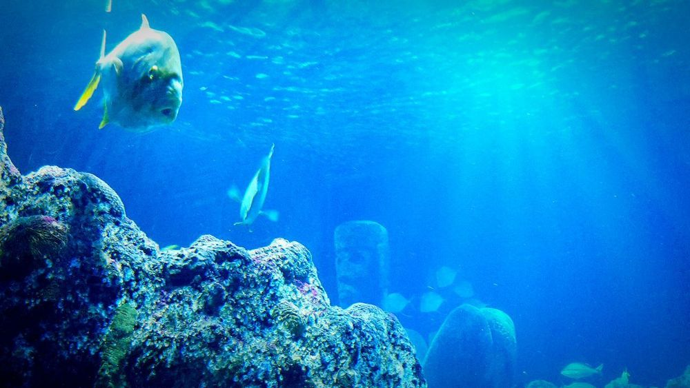 See Life Hannover Deutschland Fish Blue Water