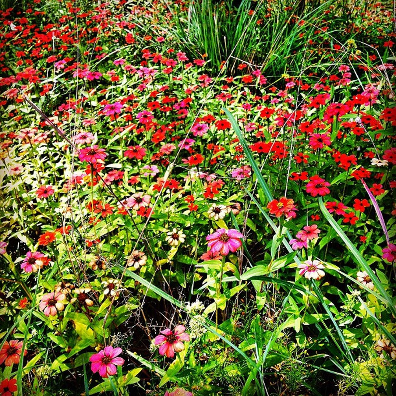 Lost in Ruby Fields Bestinstagramart Dhexpose Flowers Instamasters Flower Ace_ Flowerpower Ig_outkast Gang_family Ig_one Instauno Edit2gether Igsg Stunning_pics7 Flowerstyles_gf Icatching Flowerstagram Weareinheaven Flowermagic Flowerfields Flowerslovers Bd Master_pics Ig_captures Ig_artgallery