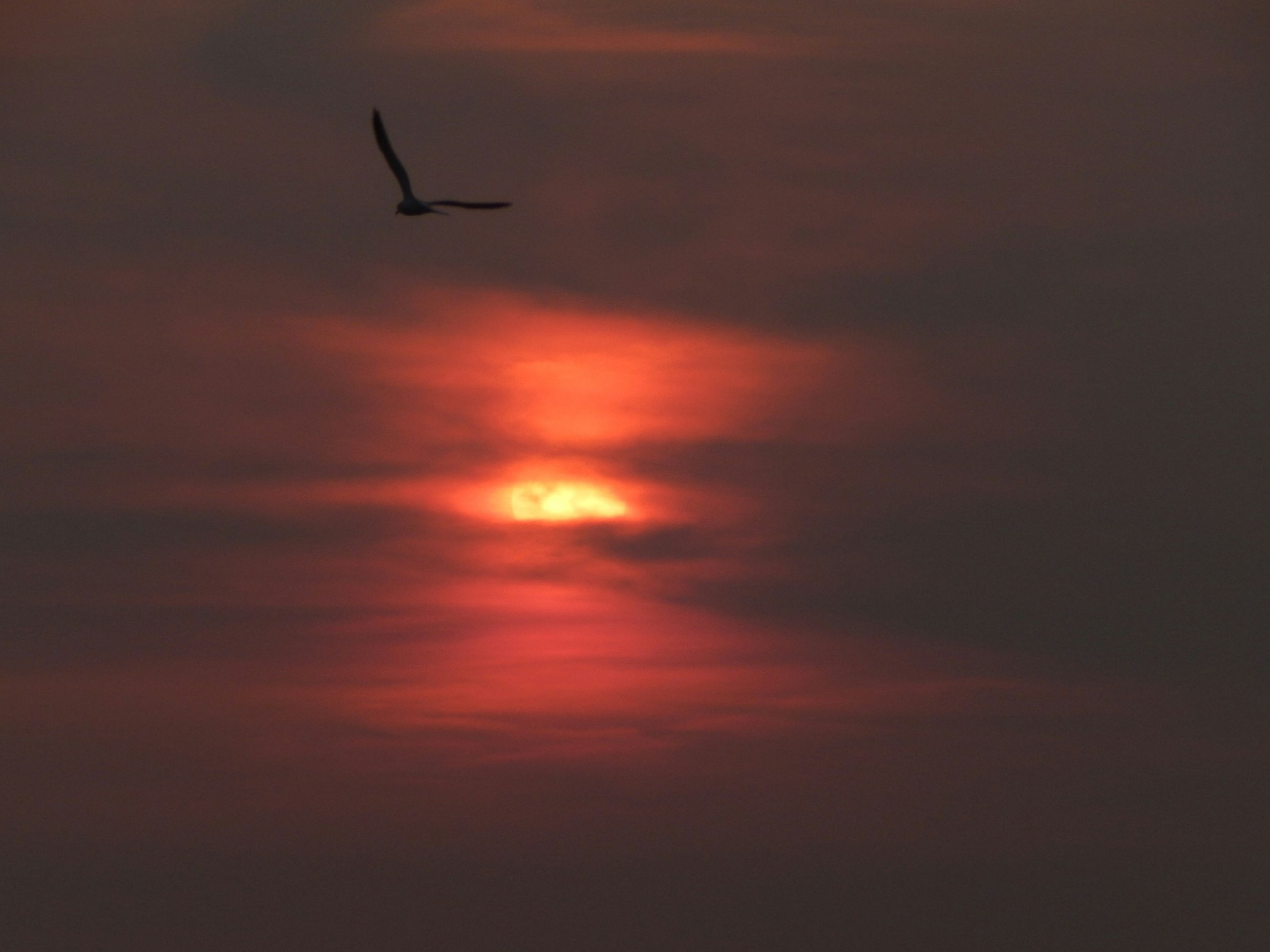 sunset, sky, flying, cloud - sky, orange color, scenics, beauty in nature, tranquility, nature, silhouette, low angle view, airplane, tranquil scene, dramatic sky, cloudy, idyllic, dusk, weather, cloud, outdoors