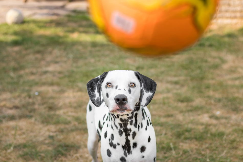 Beautiful stock photos of garden, Soccer, activity, alertness, animal Themes