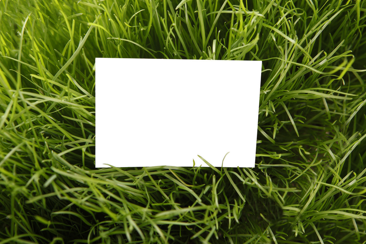 Announcement Message Backgrounds Blank Business Copy Space Corporate Business Curled Up Day Easter Easter Cards Empty Grass Green Color Nature No People Note Pad Outdoors Paper Plant Reminder Textured  White Color