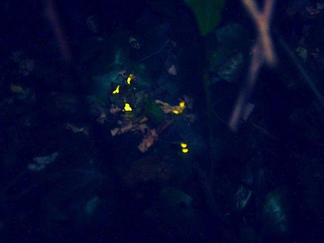 Fireflies Night Nightphotography Interesting Forest