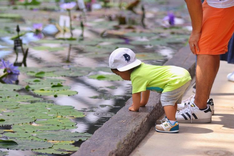 Child Outdoors Leaning Curious Japan Pond Flowers Garden Colors Cap Summer