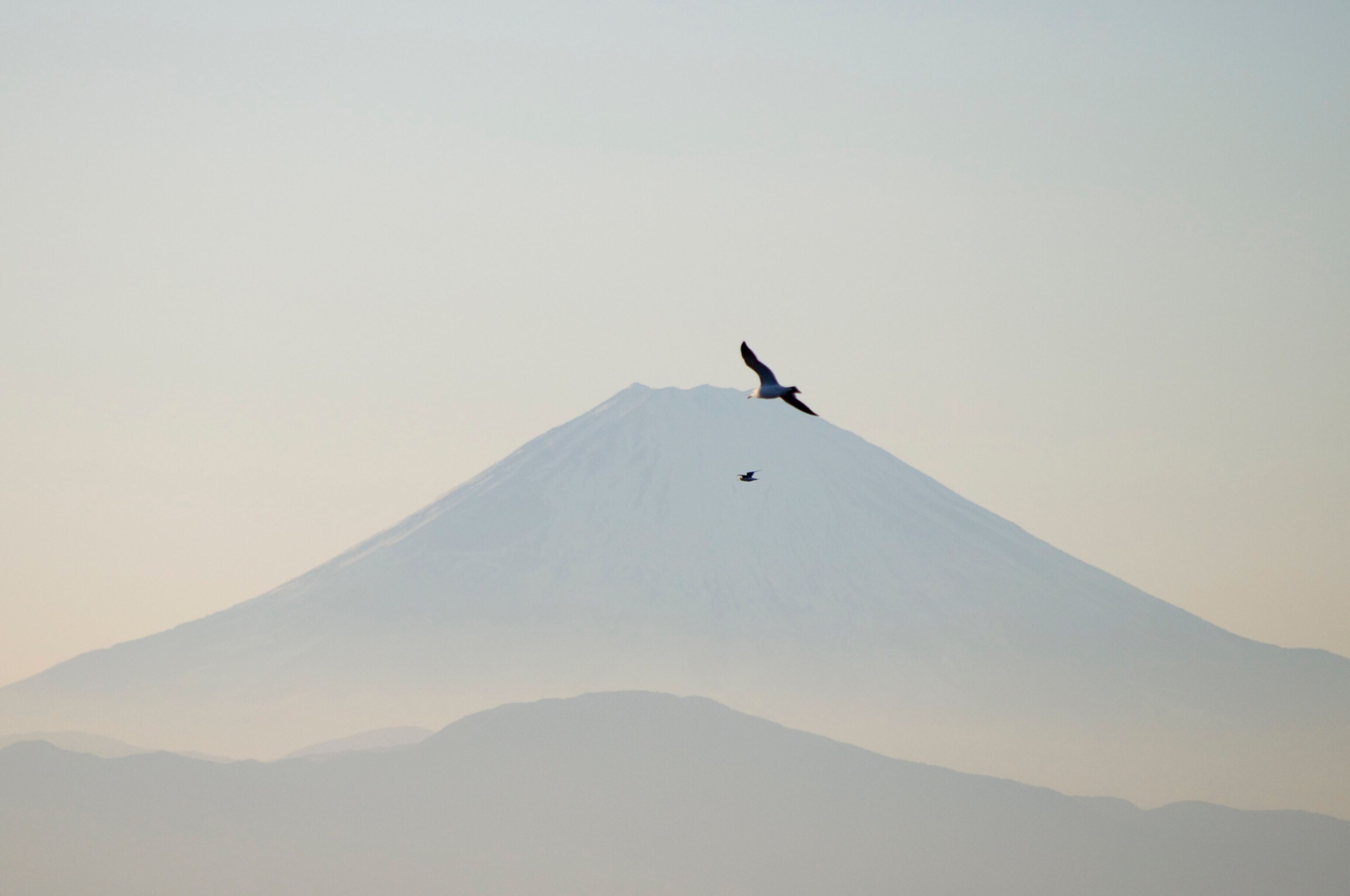 flying, mountain, clear sky, bird, low angle view, copy space, mid-air, nature, scenics, beauty in nature, mountain range, tranquil scene, tranquility, animal themes, sky, day, landscape, outdoors, wildlife