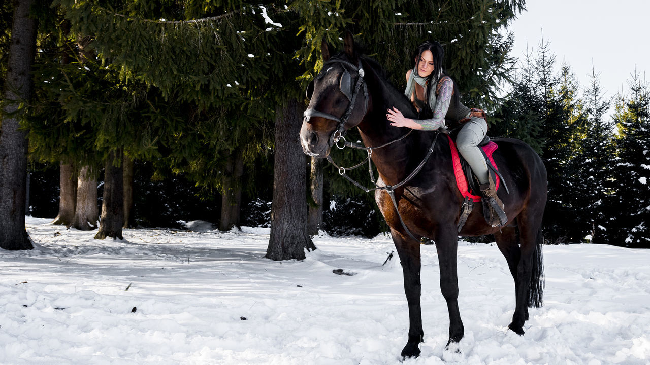 It's Cold Outside Service Animals Romania ! Romaniangirl Nikon D810 Nikonphotography Romanian  Romanian Lands Horse Horse Riding Made In Romania Simple Beauty Eyemgallery Eyemphotography Miss Tanase Ana Maria Tattoo