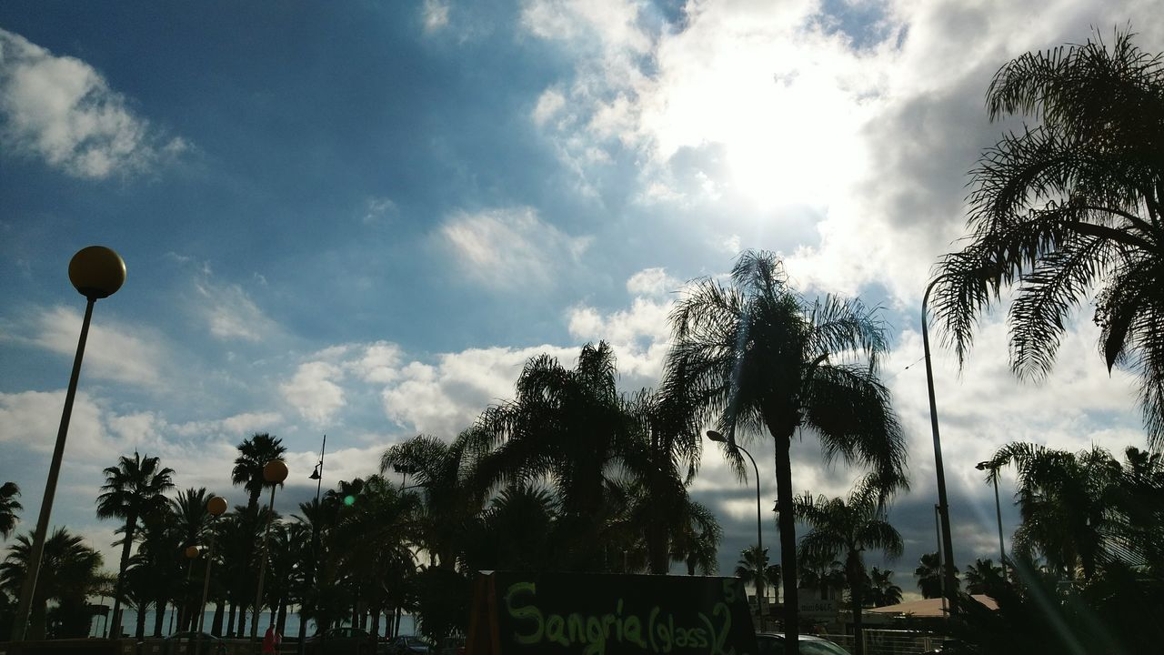 tree, palm tree, sky, cloud - sky, low angle view, nature, day, no people, tranquility, growth, beauty in nature, outdoors