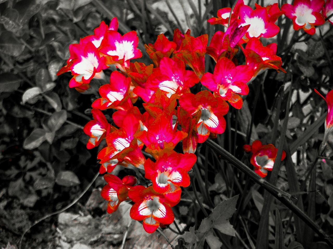 Flower Red Flowers Nature Beauty In Nature Fragility Growth Petal Freshness Plant Flower Head Branch Tree Blooming Red Flowers Wild Flowers Carmine Flowers_collection Flowers,Plants & Garden Black And Red