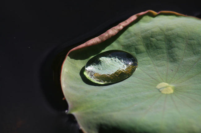 Beauty In Nature Drops Nature Pflanzen Plant Pond Reflection Seerosenblätter Teich Teichrosenblatt Wasser Wasserpflanzen Wassertropfen Water Water Lily