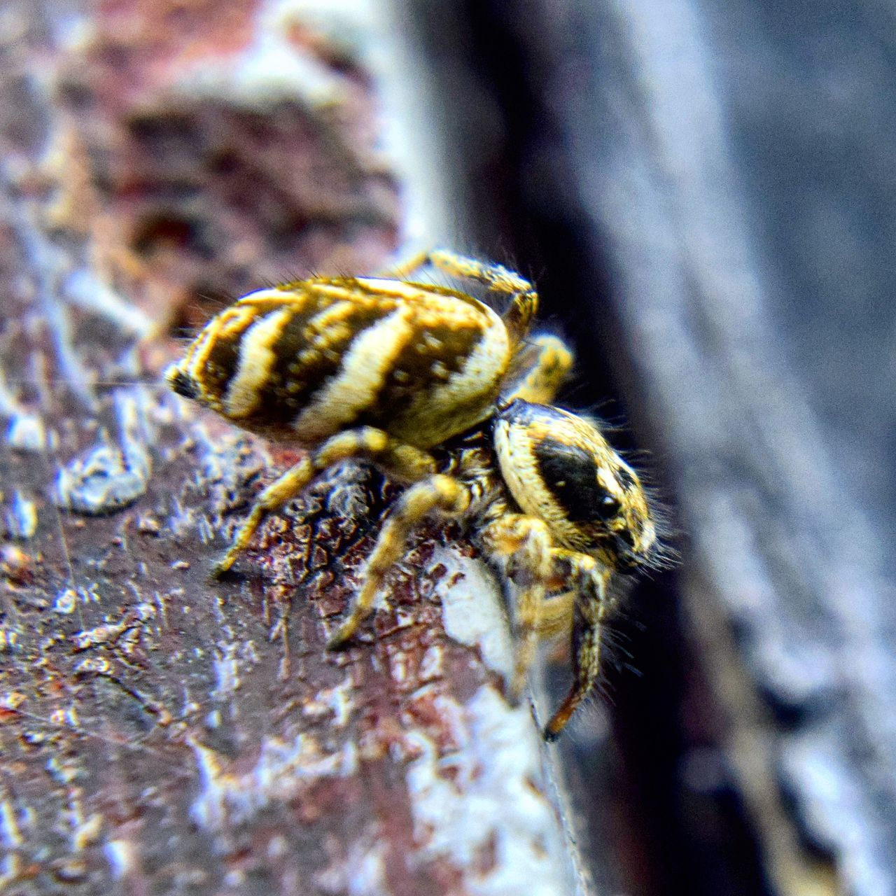 one animal, animal themes, close-up, animals in the wild, spider, selective focus, day, nature, no people, animal wildlife, outdoors