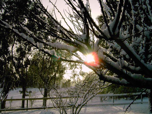 Snow Snowing ❄ Snowscape Snow ❄ Snowing Snow Covered Snowy Days... Snowsnowsnow.  Snow Day Sunrays! :) Sunrays Sunlight Sunlight And Shadow Sunlight ☀ Lens Flare Lensflares