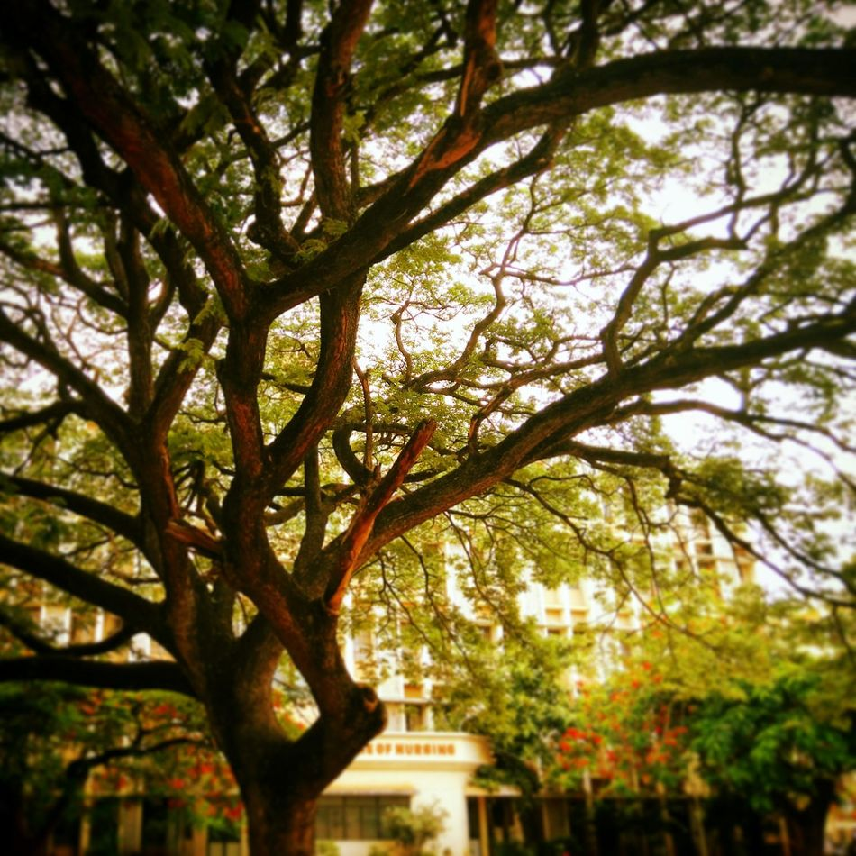 The Love For Trees Enjoying Nature Walking With Friends College Campus Nature Photography 😍