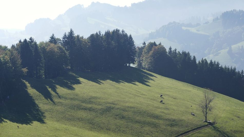 Zürcher Oberland Switzerland Cows Grass Trees Outdoors Mountains Nature Alps Scenics Fall Landscapes Sunlight Shadow No People