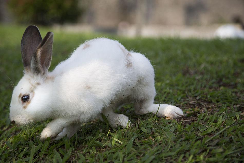 Beautiful stock photos of rabbit, Animal, Animal Themes, Close-Up, Day
