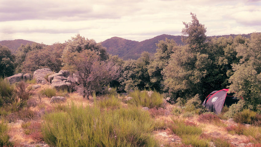 Adventure Beauty In Nature Camping Forest France Heath Heather Hicking L'Estréchure Landscape Mountain Nature Outdoors Provence Scenics Summer Tent