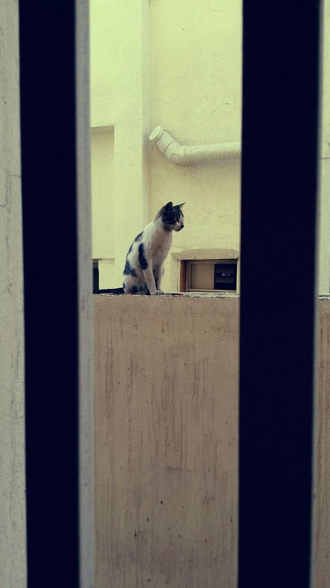 Cat By_me هومي  Taking Photos