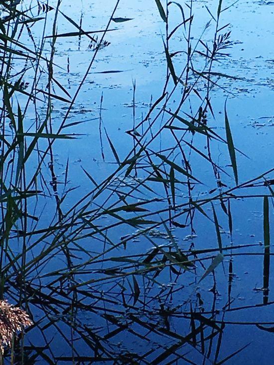 Beautiful Nature Enjoying The Sun Lake View