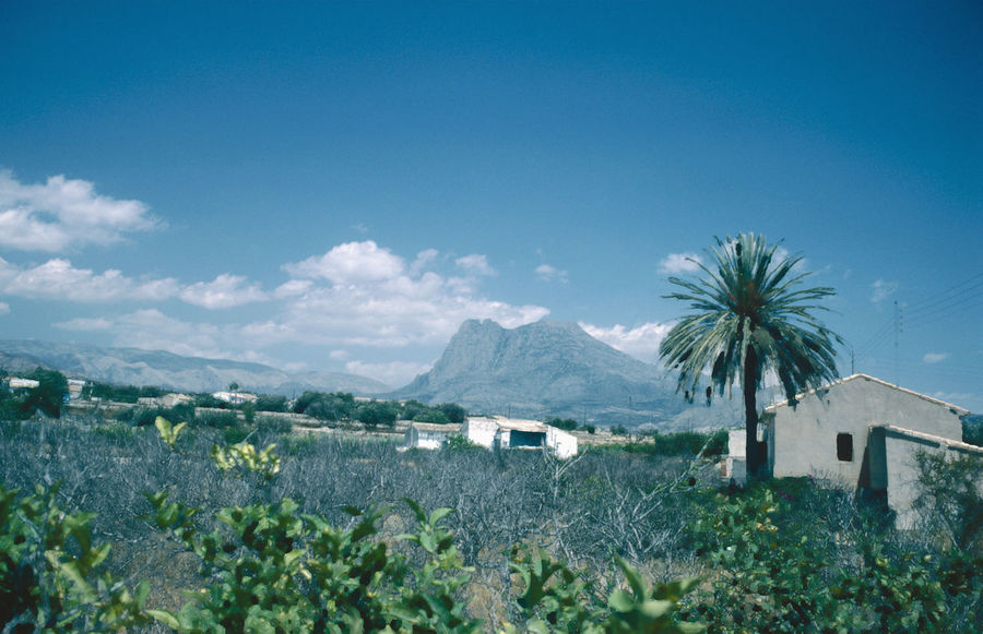 On route to Guadaleste Kodachrome Beauty In Nature Building Exterior Built Structure Day Mountain Nature No People Outdoors Palm Tree Plant Polarising Filter Sky Tree