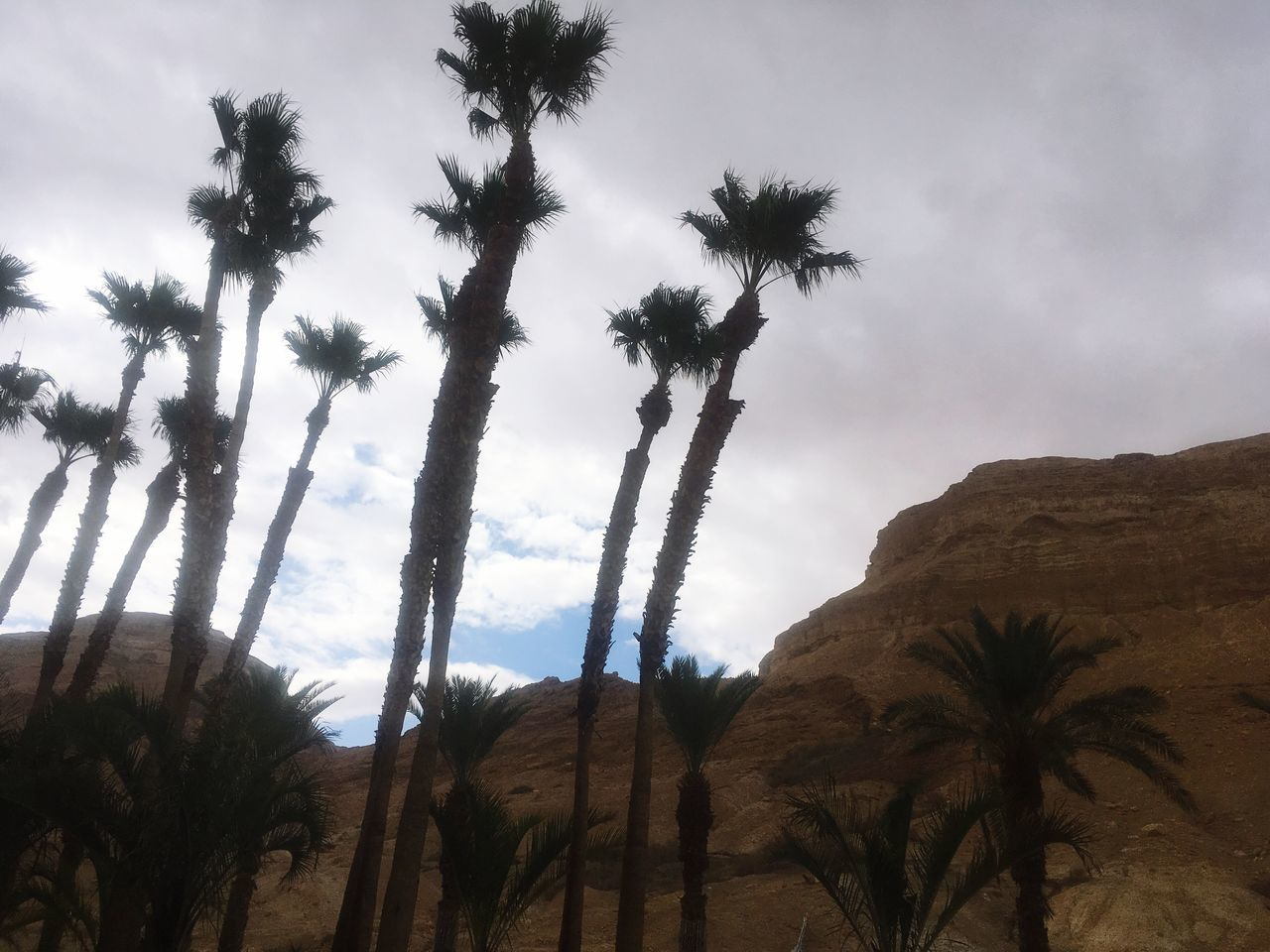 Palm Tree Tree Sky Tranquil Scene Nature Beauty In Nature Scenics Tranquility No People Outdoors Day Landscape Non-urban Scene Low Angle View Tree Trunk Cloud - Sky Travel Destinations Mountain Arid Climate Israel Deadsea Deadsea_israel