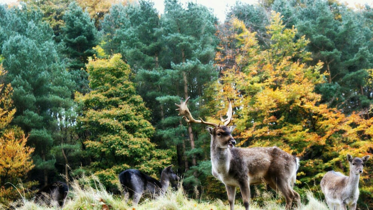 King of the Hill Nature Beautiful Landscape Trees Wildlife Deer