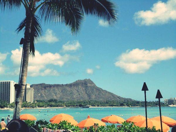 Waikiki Waikiki Beach Beach Palm Trees Oahu Hawaii