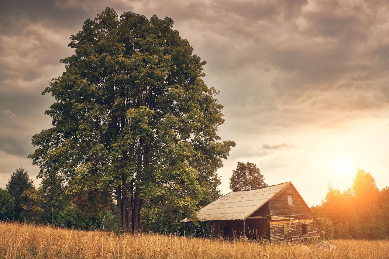 tree, nature, scenics, tranquility, beauty in nature, sky, field, tranquil scene, no people, landscape, built structure, outdoors, sunset, grass, growth, architecture, rural scene, day