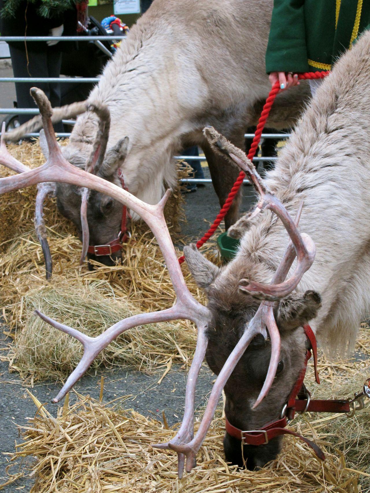 Beautiful stock photos of elfen, Animal Pen, Animal Themes, Animal Wildlife, Animals In The Wild