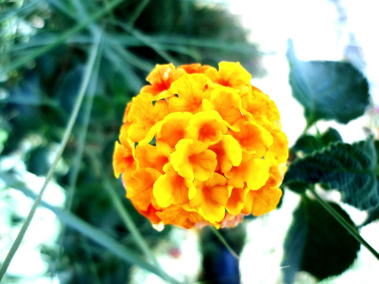 flower, beauty in nature, nature, fragility, petal, freshness, growth, yellow, close-up, flower head, plant, day, focus on foreground, outdoors, no people, blooming
